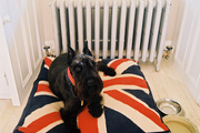 Deborah Lloyd's dog rests on a Union Jack dog bed in a country-style kitchen.