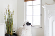 A living area with a stuffed sheep and corner plant.