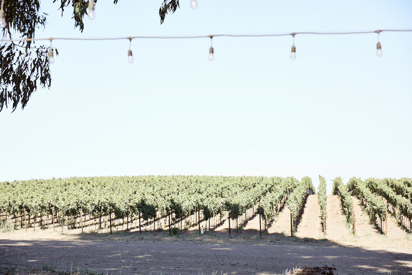 Grape Vines Photos (1 of 3)