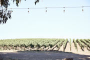 A vineyard during the day.