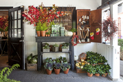 Potted plants and gardening supplies on display