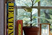 Books and natural curiosities on a sunny windowsill