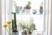 A kitchen window above the sink with shelving for small plants
