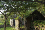 Overgrown foliage covering a stone wall