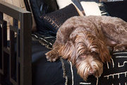 A furry pup takes a snooze on a cozy daybed