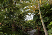 A stone-lined garden path lined with palms and tropical greenery