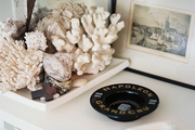 White coral and shells on a tray