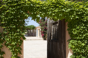 An ivy-covered doorway on Majorca