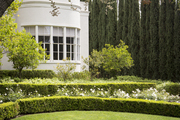 Boxwood hedges and cypress trees outside a white home
