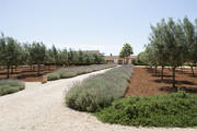 A landscaped  Majorca property featuring olive trees and lavender-bordered pathways
