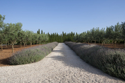 A lavender-bordered walkway on a landscaped Majorca property