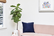 A pink velvet couch with a navy accent pillow in a seating are with a fiddle leaf fig and flowers.