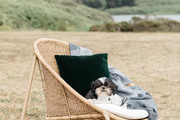 A black and white dog sitting in a wicker chair.