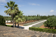 A landscaped walkway, adorned with palm trees, leading to a Majorca home