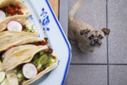 A furry party crasher eying a platter of tacos
