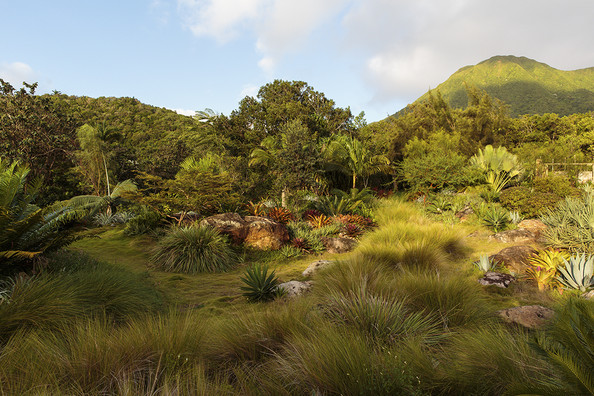Tropical Landscaping Photos (9 of 41)