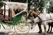 Horse-drawn carriages in Marrakech