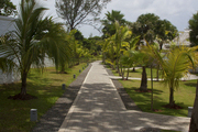 A pathway lined with trees