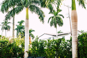 Here is a mod backyard set by palm trees.