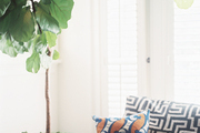 A potted tree next to a patterned couch
