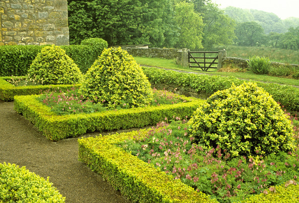 Buxus Sempervirens Suffruticosa Photos Design Ideas