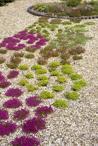 Ground Cover Photos Design Ideas Remodel And Decor Lonny