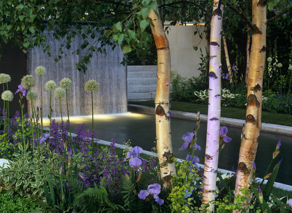 garden landscaping ideas pictures uk - Silver Birch s Design Ideas Remodel and Decor Lonny