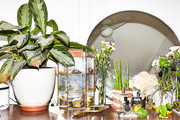 How To Bring A Dying Plant Back To Life