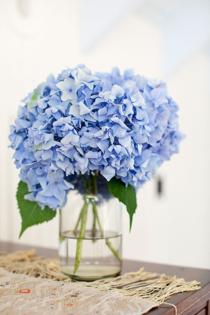 Hydrangeas from the garden are a constant presence in season.