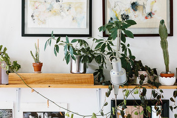 5 Pinterest-Certified Hacks To Fix The Worst Plant Problems