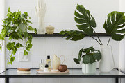 The Sill Just Released Its New Faux Plant Line