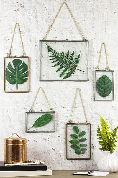 Framed Plants