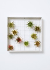 Shop It Now: Low-Maintenance Indoor Gardening with Air Plant Frames