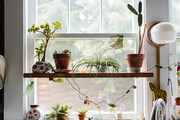 Your Guide To Keeping Your Plants Alive