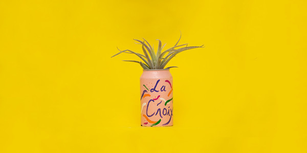 Love La Croix? You Need This Planter In Your Life
