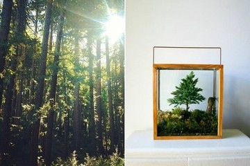 Get Lost in the Forest—at Home
