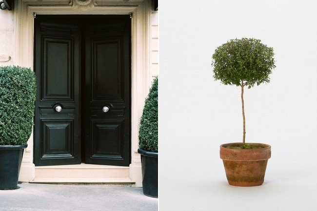 Topiaries For Front Door New House Designs