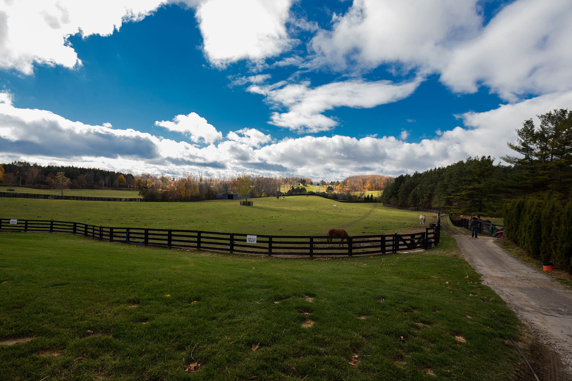 The sanctuary occupies fifty acres just outside Toronto and is also home to seventy horses.