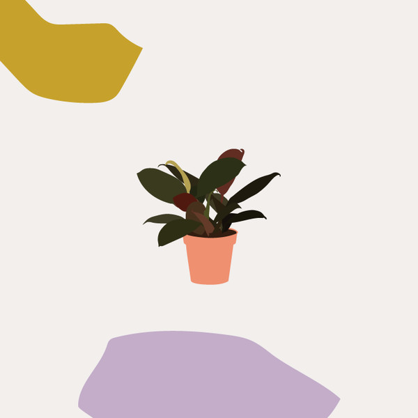 The Creative: Rubber Plant