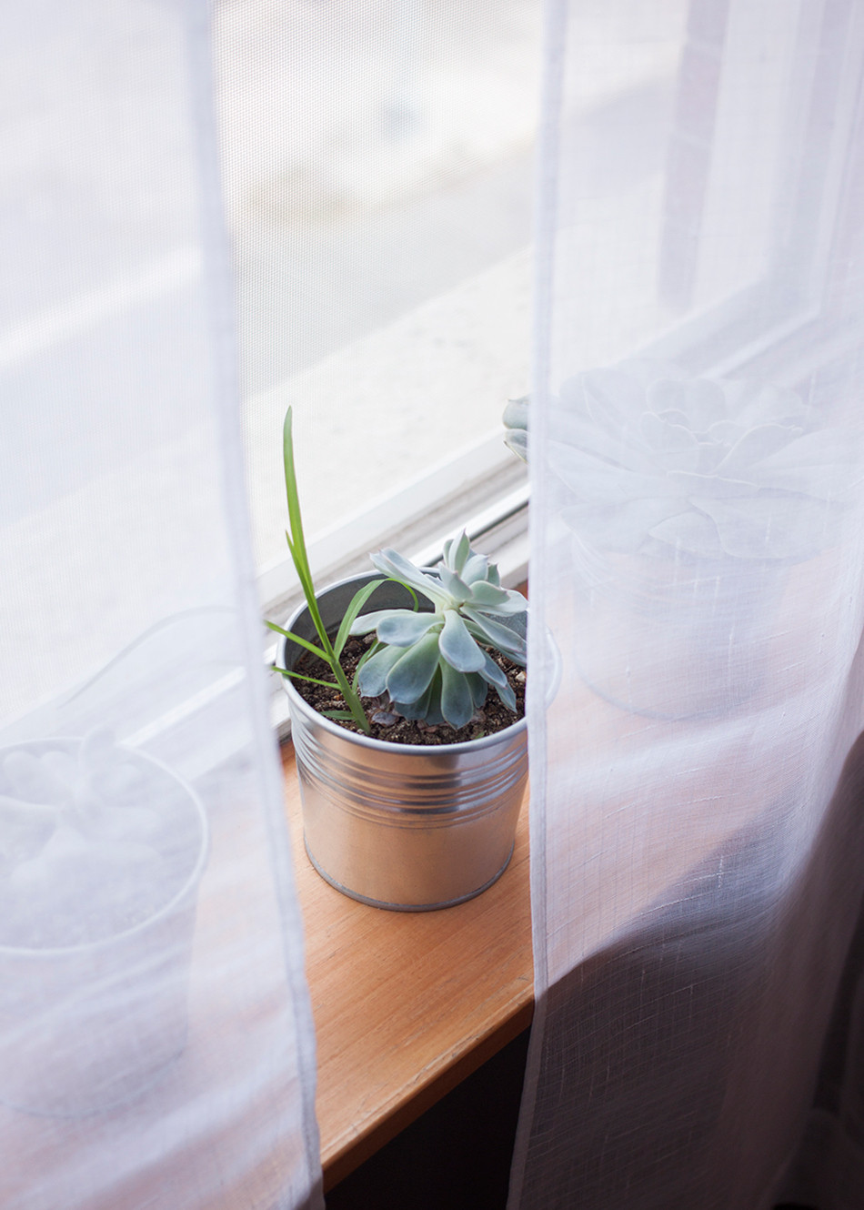 Behind gauzy linen drapery, succulents soak up the sunlight on a wood windowsill.