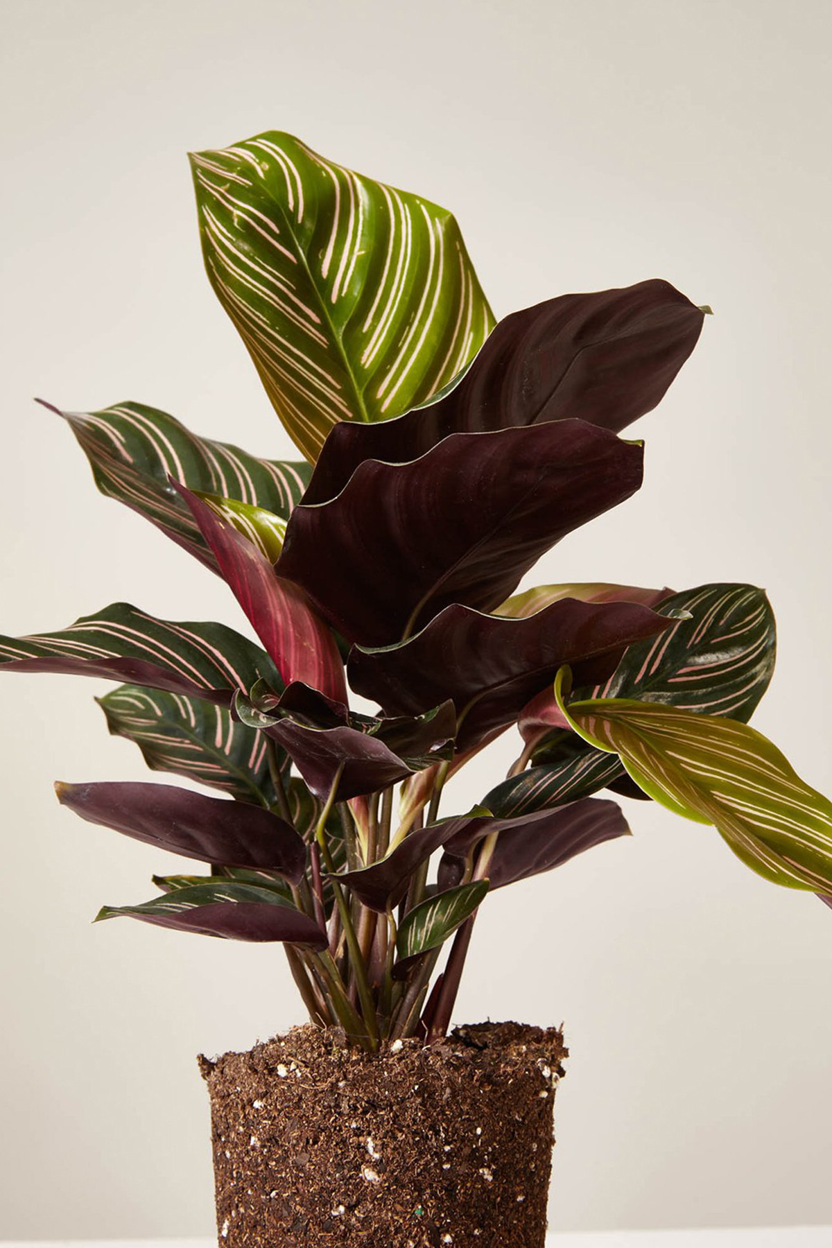 Trendy Houseplants Explained