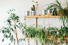 This Cool New Company Will Send Plant Whisperers To Your Home