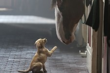 A Ranking of Budweiser's Best Clydesdale Ads